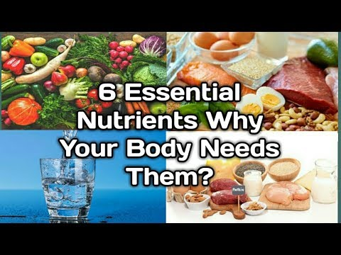 6 Essential Nutrients Why Your Body Needs Them?