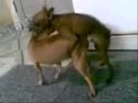 Dogs' sex
