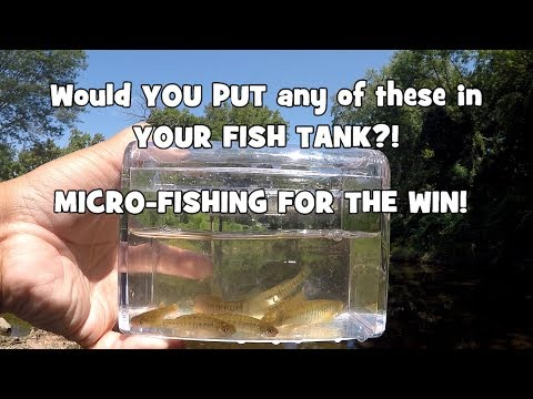 Would You Put Any of These in YOUR TANK?! Micro-Fishing the Pennypack Creek! (Bethayres, PA)