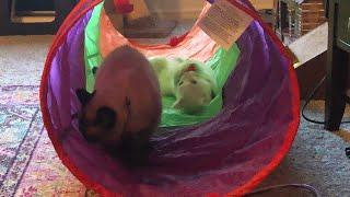 Cat Tunnel = Best Day Ever!