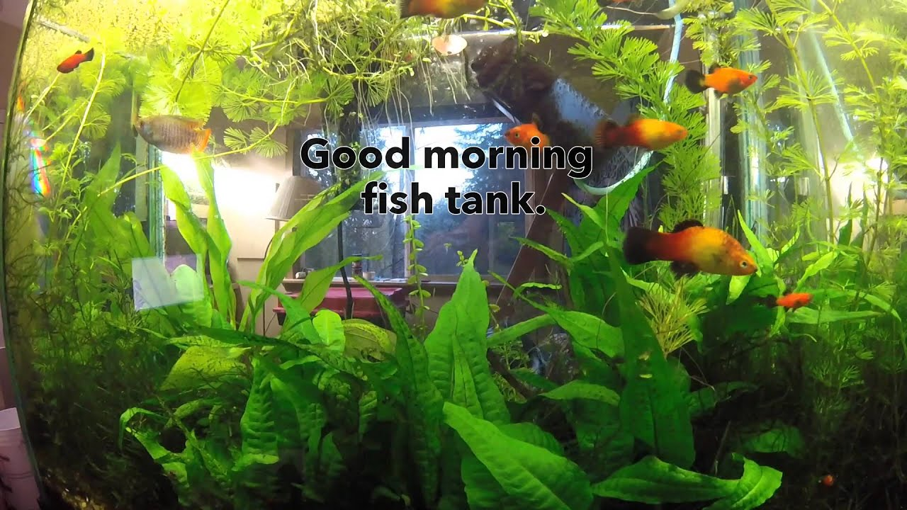 Good morning fish tank youtube for Youtube fish tank