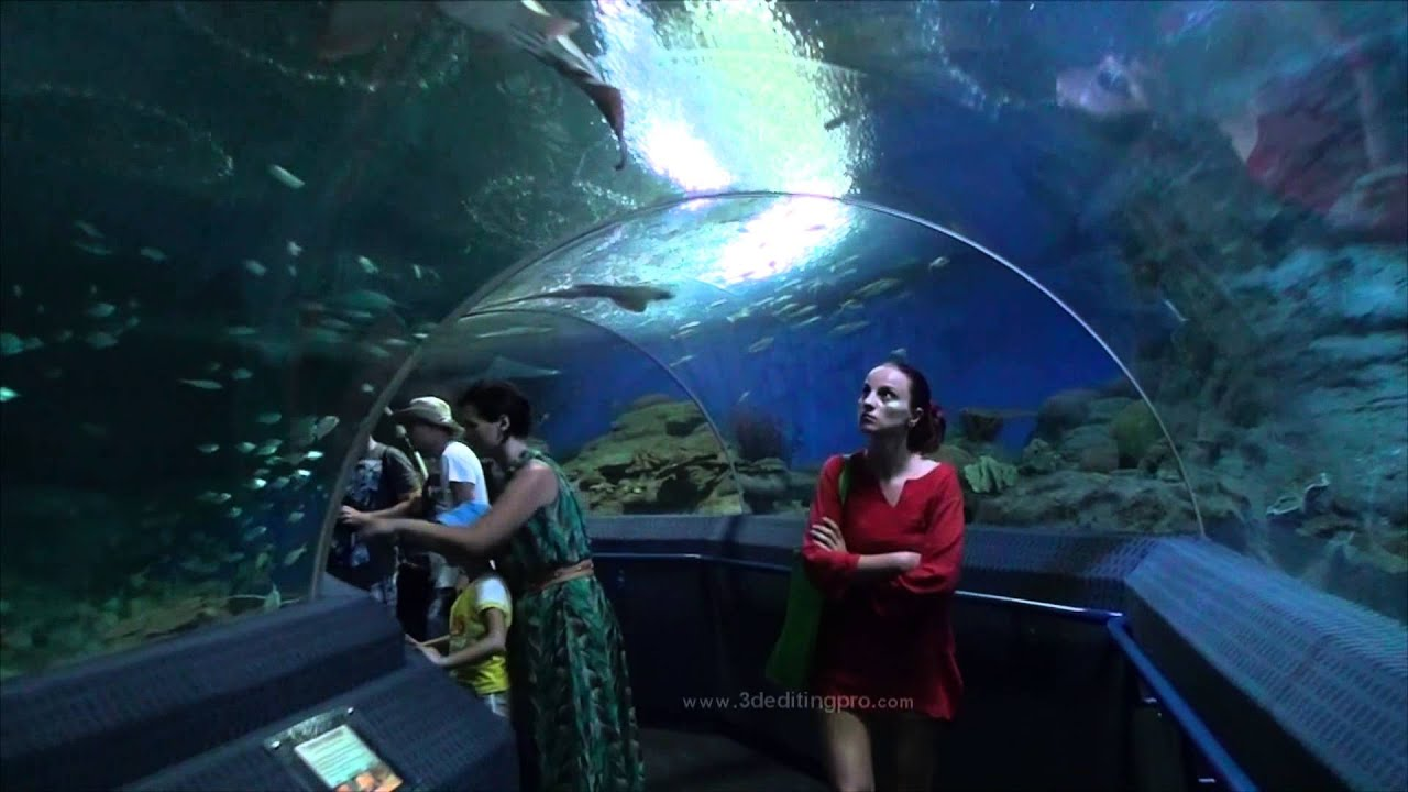 Aquarium Pattaya Underwater World Thailand 2013 HD - YouTube