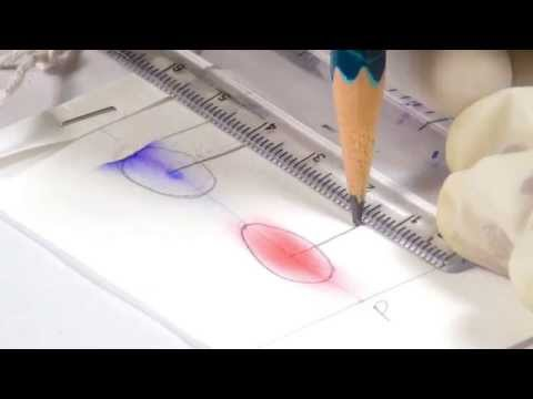 Separation of Components from a Mixture of Red and Blue Inks by Paper Chromatography - MeitY OLabs