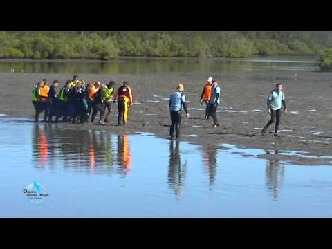 June 2015  Yamba Dolphin Lonely Rescue