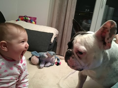 Cute best friend Babies and French bulldog Videos - Funny Babies and Pets Compilation