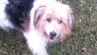 История одной брошенной собаки г.Гомель Беларусь