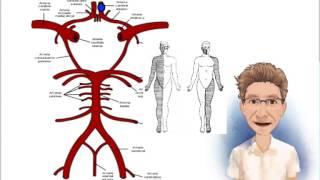 Aguda síndrome de fuga vascular
