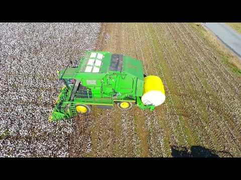 Alabama Cotton Picking 2017