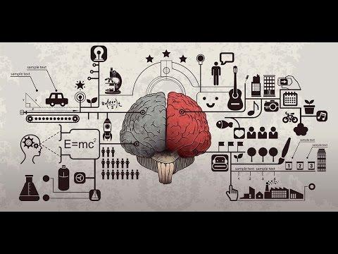 Deutsche Studie über die Gehirne mit narzisstischer Störung