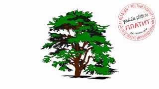 Как нарисовать дерево пихту карандашом поэтапно(Как нарисовать дерево поэтапно карандашом за короткий промежуток времени. Видео рассказывает о том, как..., 2014-07-02T17:37:47.000Z)