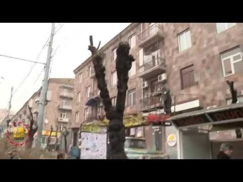 Ծառերի էտ - TV Programm «Capital» - 21.03.2015