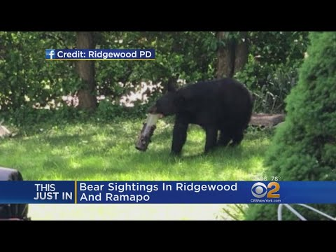 Bear Spotted In N.J. Towns