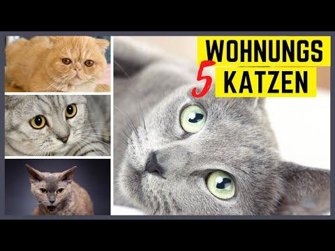 Katzenrassen fr die Wohnung  5 super und 5 furchtbare Katzenrassen fr Wohnungshaltung