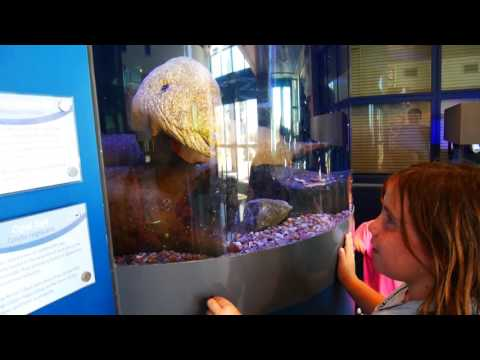 Moray Eels at Living Coast - Rayayray