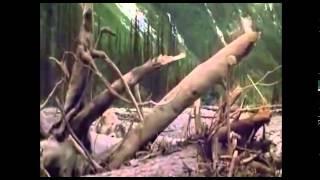 Trailer - El clan del oso cavernario