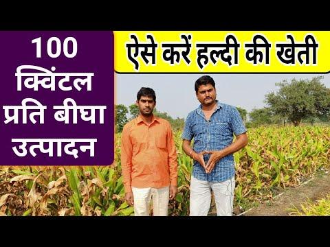 Turmeric Farming In India हल्दी की खेती कैसे करें Haldi Ki Kheti - Agritech Guruji