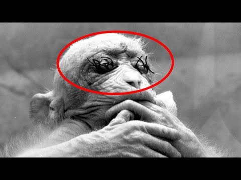 5 Experimente an Tieren | MythenAkte
