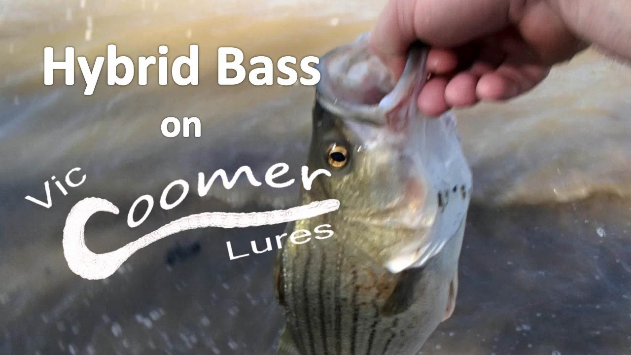 hybrid bass on vic coomer lures - youtube, Reel Combo