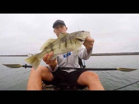 Newport Harbor Fishing - Huge Sand Bass!!