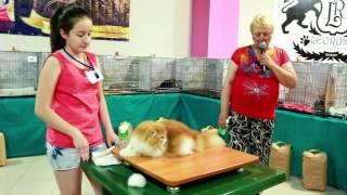 С выставки кошек 12-13 июля 2014 г. Воронеж