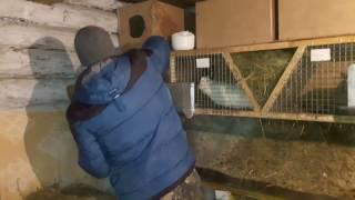Обзор маточника для кроликов//Ставим маточники в клетки//Ждем потомства!!!