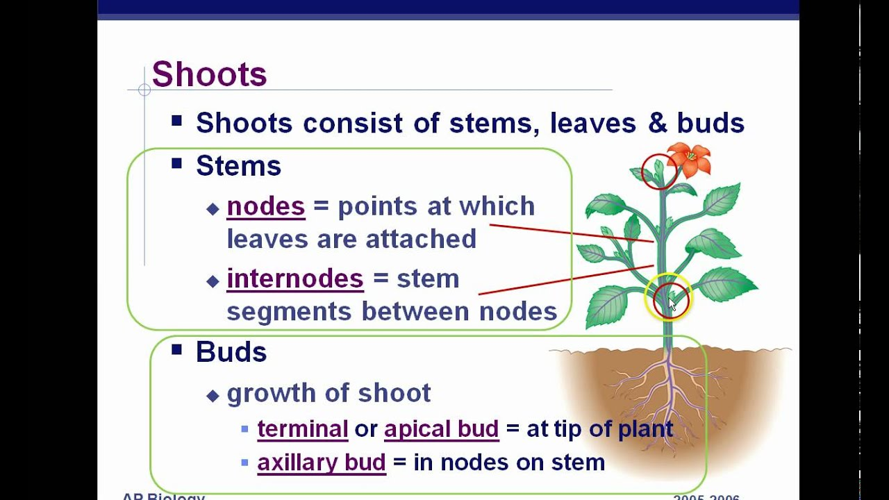 AP Biology Plant Anatomy Chapter 35 part 1 - YouTube