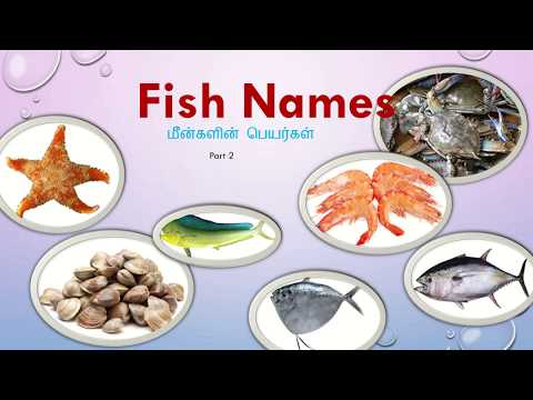 Learn Fish Names In Tamil And English With Pictures
