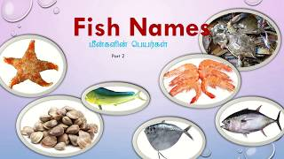 Learn fish names in Tamil- Fish Names With Pictures Tamil & English