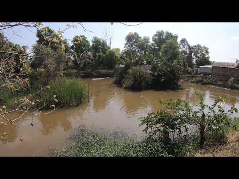 Tham Quan Trang Trại Nuôi Le Le, Sen ốc, Cò, Vạc, Còng Cọc ở Rừng U Minh
