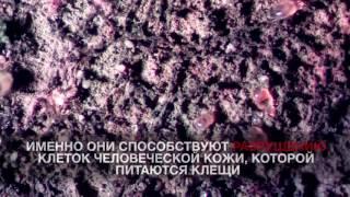 Пылевые клещи под микроскопом(, 2017-01-28T12:18:48.000Z)