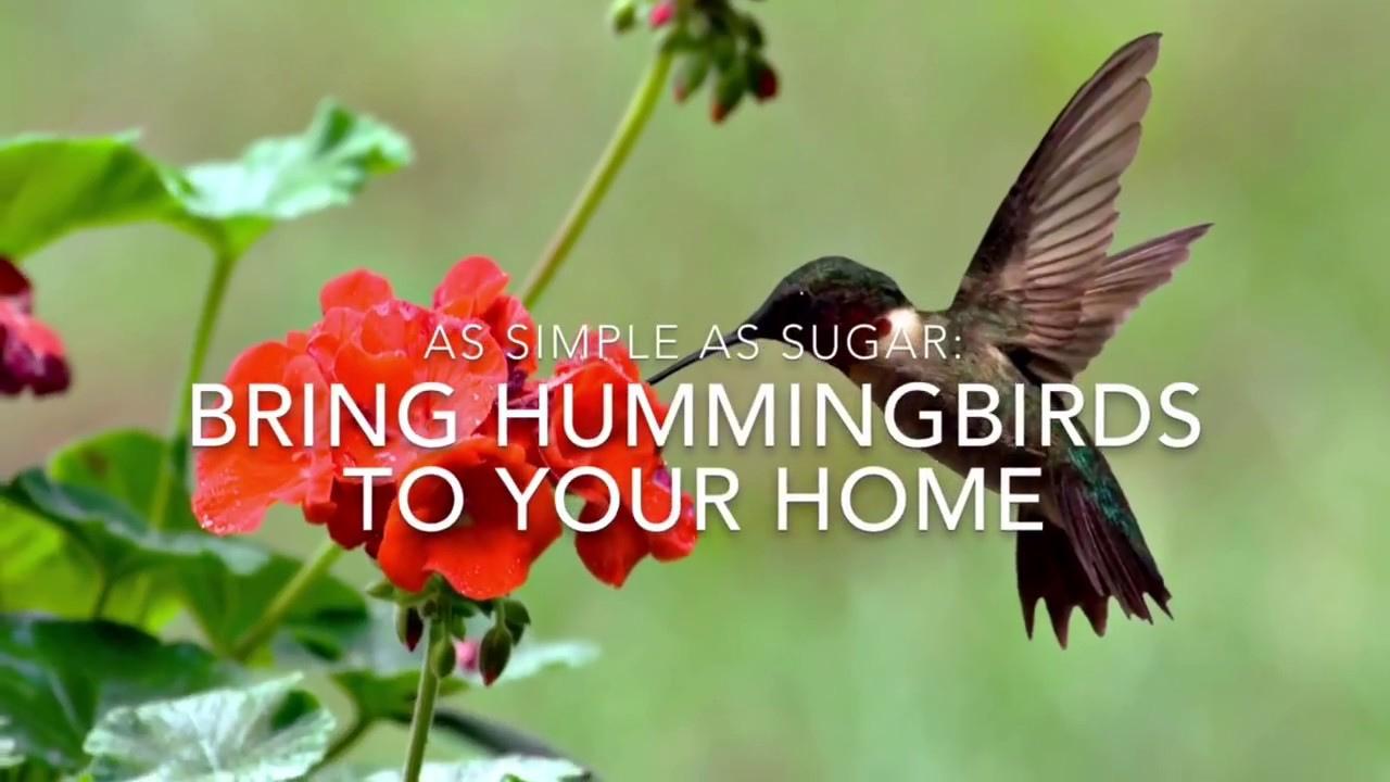 Wonderful How To Attract Hummingbirds
