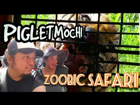 Zoobic Safari Adventure! Up Close with Live Tigers!!