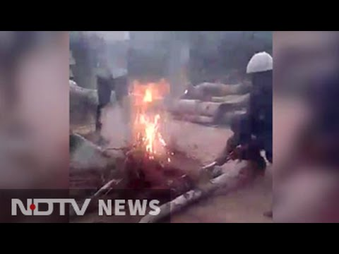Video of boys burning puppies alive in Hyderabad sparks outrage