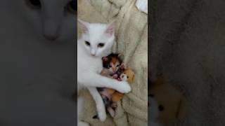Bebeğini ve Bebeğinin Oyuncağını Koruyan Anne Kedi.
