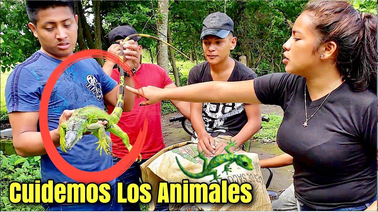 compre-una-iguana-en-100-pa-dejarla-libre-en-la-montaa