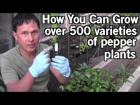 How You Can Grow 500+ Varieties of Pepper Plants including World's Hottest