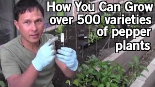 How You Can Grow 500+ Varieties of Pepper Plants including World