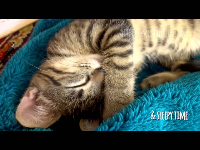 My daily kitten routine