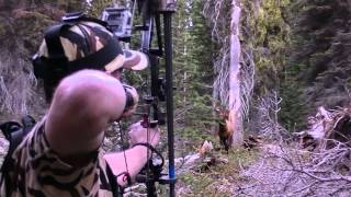 Top Priority Hunting Elk 2013