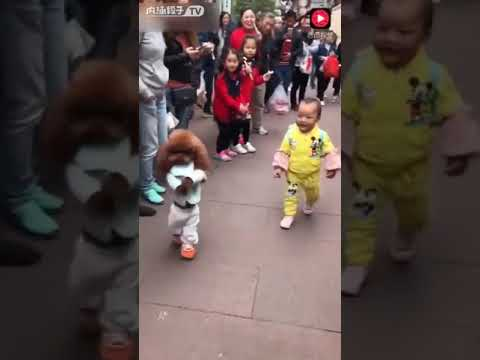 Small funny dog with child