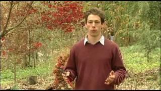 Pruning Japanese Maples by Joseph Monte, Wildwood Farm