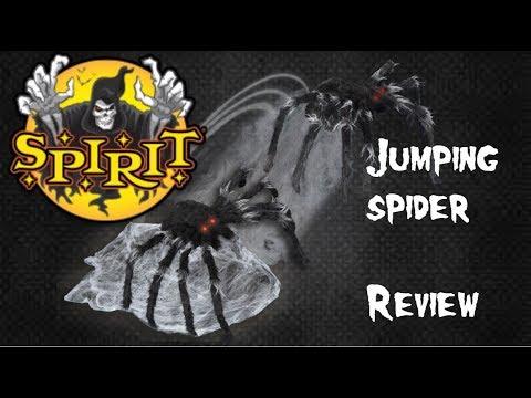 jumping spider | eBay