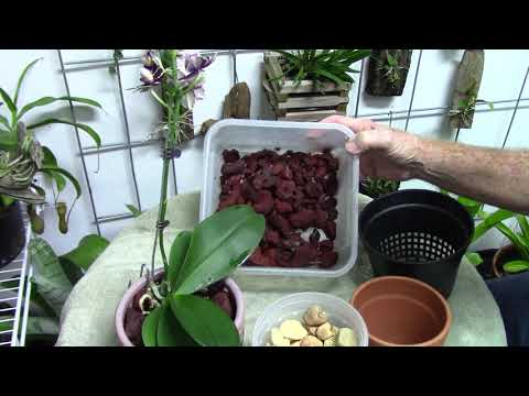 Orchids.......Phal Re-pot In Lava, Chat About Inert Medias....