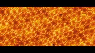 КЛИП пчеловод  в HD качестве