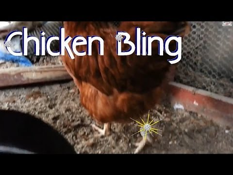 chickens with chicken bling leg bands