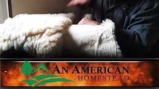 Animal Pelts And Tanning - An American Homestead