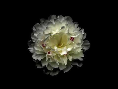 Floral International Open Art Call Accepted Artists