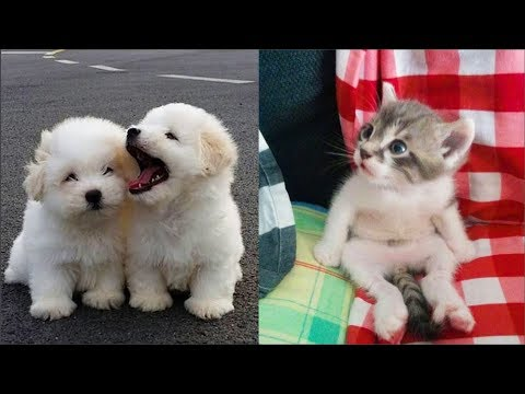 Cute baby animals Videos Compilation cute moment of the animals Soo Cute! #44