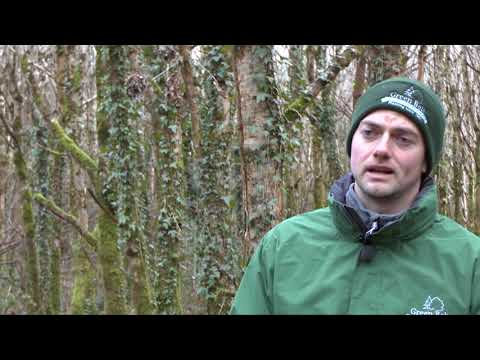 Forester - Forestry Careers Ireland