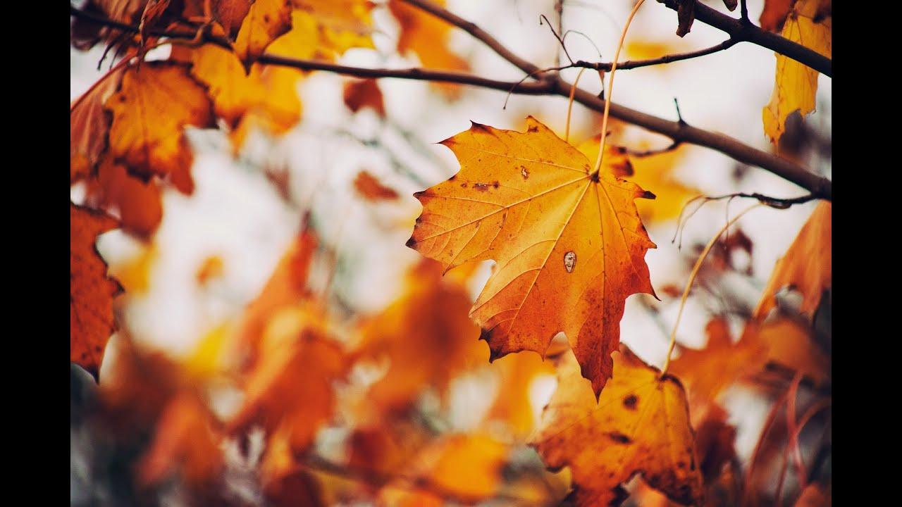 Скачать звуки осени шуршание листьев